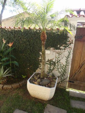 Vaso em concreto ,formato octogonal c/desenhos c/planta Fênix adulta, gerânio e pedras