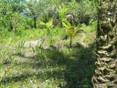 Fazenda para venda em camamu, tapuía - Foto 9