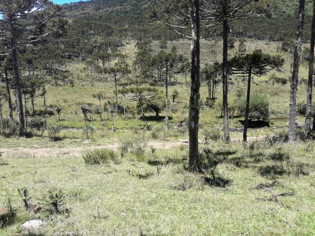 Sitio em Urubici/chácara rural em Urubici/área rural - Foto 2