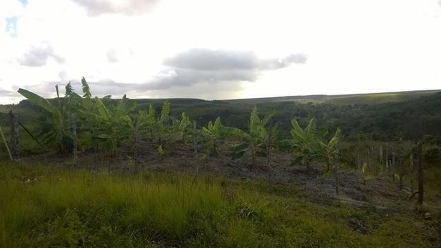 Fazenda em Entre Rios Ba - Foto 2