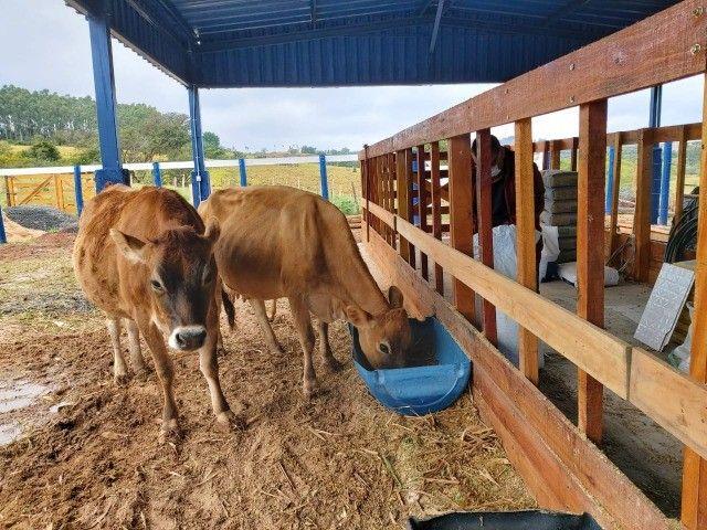 Sítio com Leiteira, Piquetes Irrigado - Foto 14