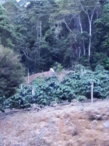 Fazenda com 15 Hectares (150 mil metros) em João Neiva - Foto 7