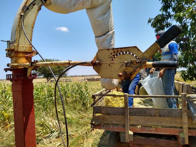 Silagem de milho - Foto 4