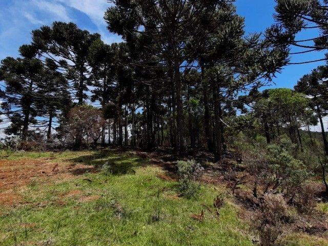 Terreno à venda em Urupema - Foto 6