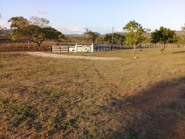 Lindíssima Fazendinha na região rural de Antonio Cardoso Bahia - Foto 6