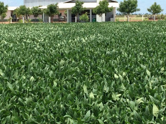 venda de terras e fazendas em roraima