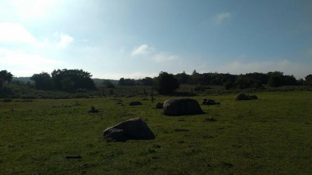 86 hectares de campo