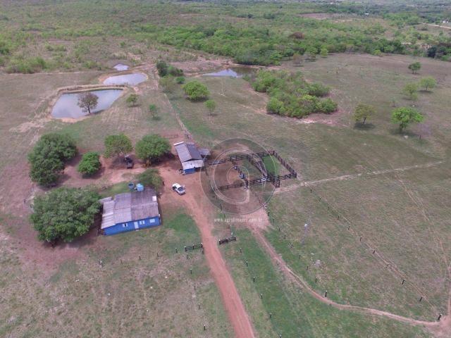 Sítio 70 ha na guia - Foto 2