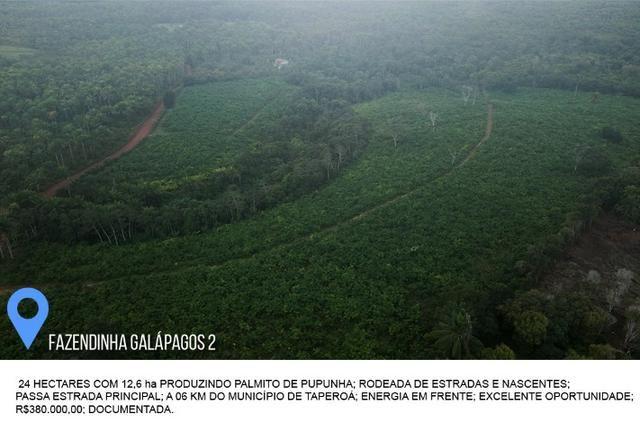 Fazenda Galápagos 2 - 24 Hectares - Foto 3