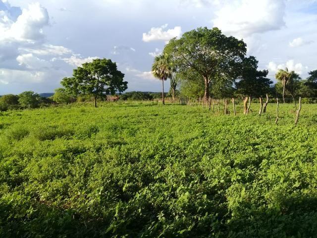 Fazenda Paudarco no Piauí