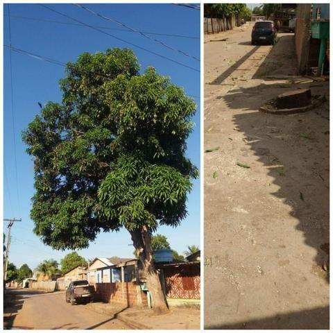 Corte e poda de árvores - Foto 2