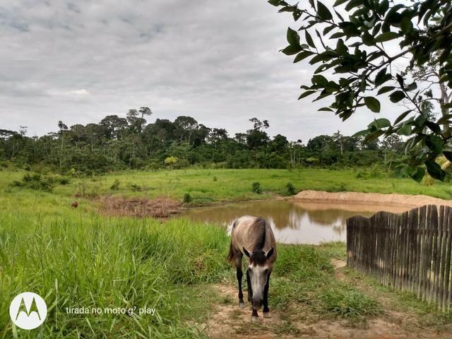 Colônia com 100 hequitare de terra por 160.000 - Foto 4