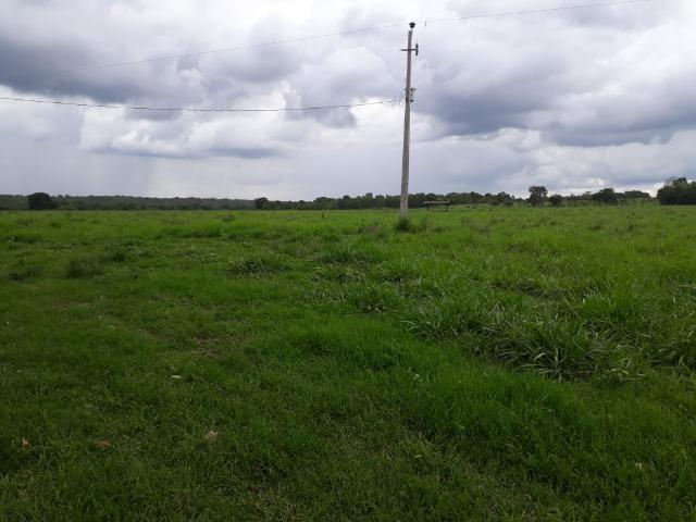 Fazenda com 160 aqls em Formoso do Araguaia - TO c/ confinamento e ótima infra!! - Foto 9