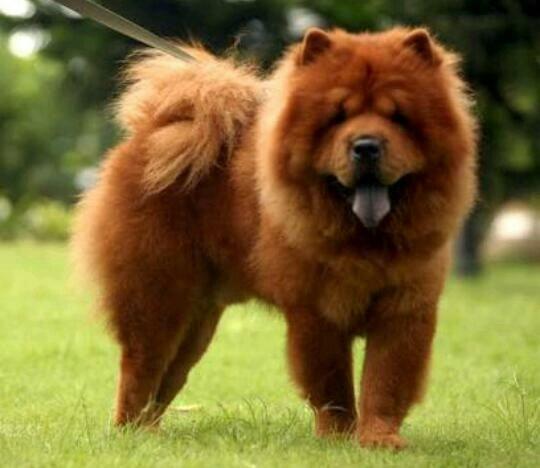 Cachorro X Carrinho de lanche - leia