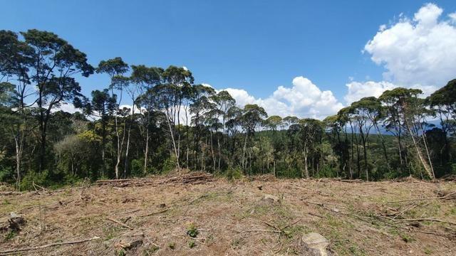 Sitio em Urubici /chácara em Urubici /sitio próximo a Rio Rufino - Foto 4