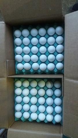 Ovos brancos Caixa (110,00)