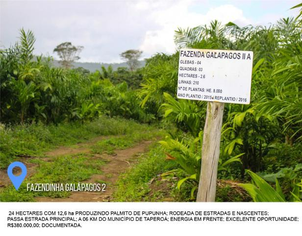 Fazenda Galápagos 2 - 24 Hectares