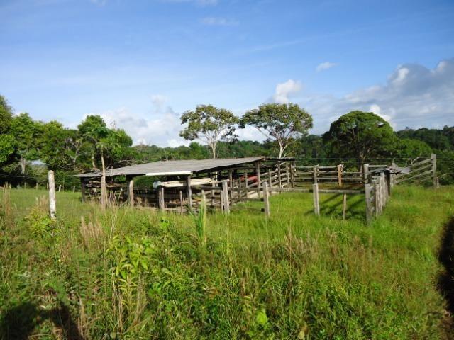 Fazenda Ilhéus Bahia/ Sul da Bahia - Foto 15