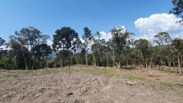 Sitio em Urubici / chácara em Urubici /próximo a Rio Rufino - Foto 6
