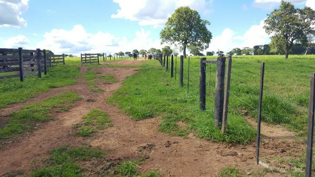 JP 013 -Ótima fazenda colado no Gama,excelente localização - Foto 12