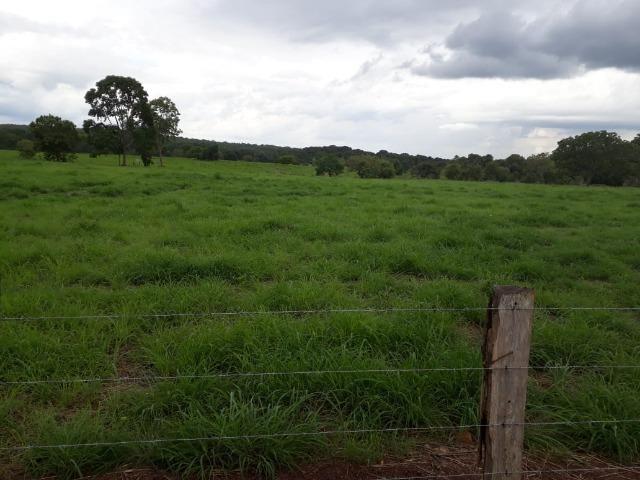 Fazenda com 160 aqls em Formoso do Araguaia - TO c/ confinamento e ótima infra!! - Foto 6