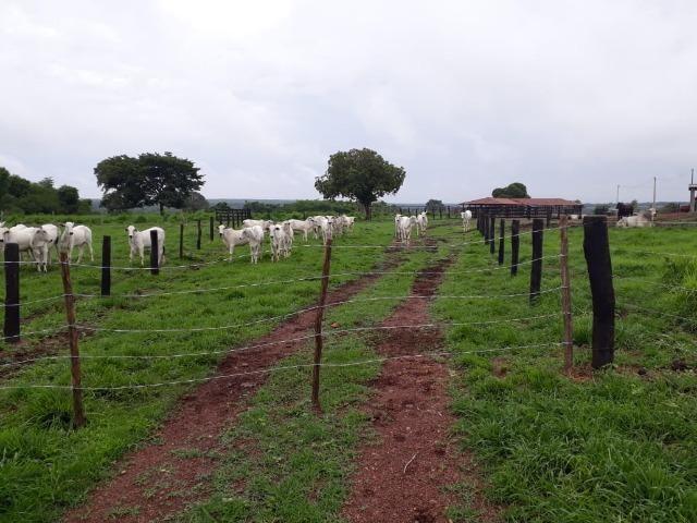 Fazenda com 160 aqls em Formoso do Araguaia - TO c/ confinamento e ótima infra!! - Foto 16