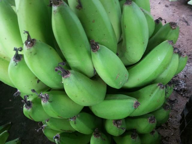 Banana verde pra Biomassa