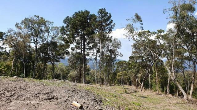 Sitio em Urubici /chácara em Urubici /sitio próximo a Rio Rufino - Foto 12