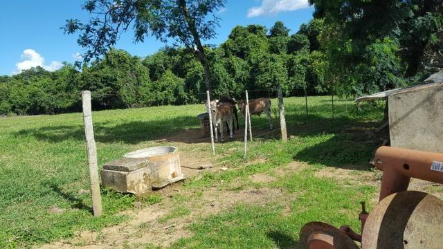 JP 013 -Ótima fazenda colado no Gama,excelente localização - Foto 9