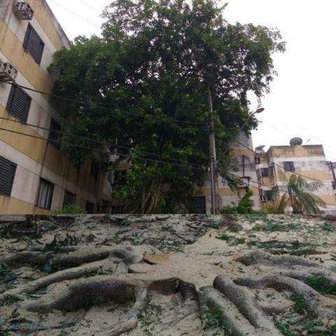 Corte e poda de árvores - Foto 4