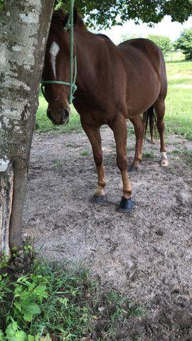 Cavalo pronto de direita - Foto 4