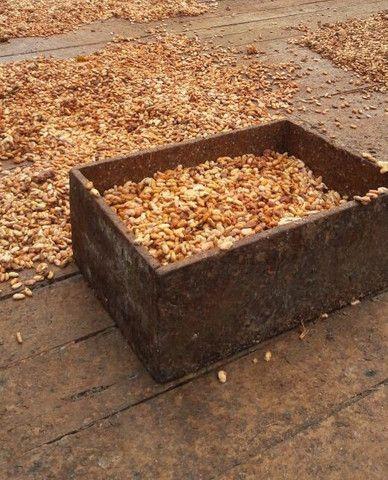 Amendoas de cacau torradas 1kg Ibiracau - Foto 5