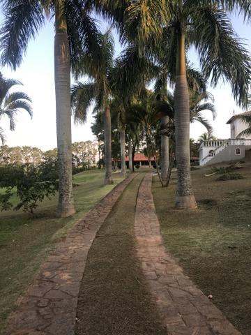 Palmeiras imperial adultas e sadias - Foto 5