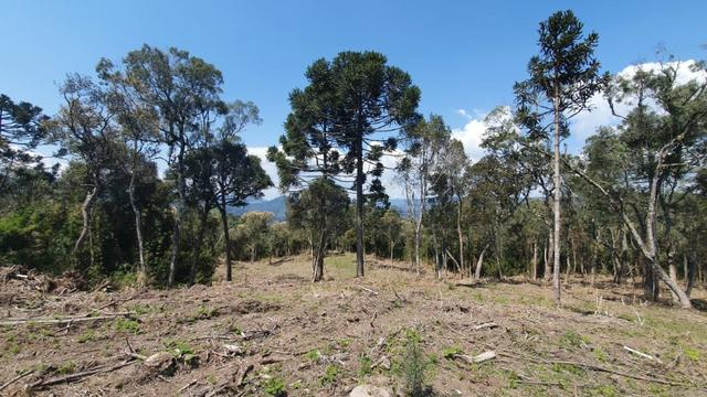 Sitio em Urubici /chácara em Urubici /sitio próximo a Rio Rufino - Foto 8