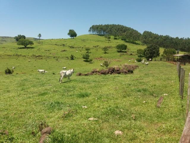 Área rural localizado na cidade de Lindoeste-PR - Foto 19