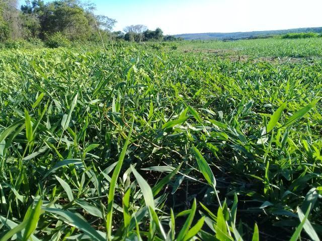 Fazenda Paudarco no Piauí - Foto 5