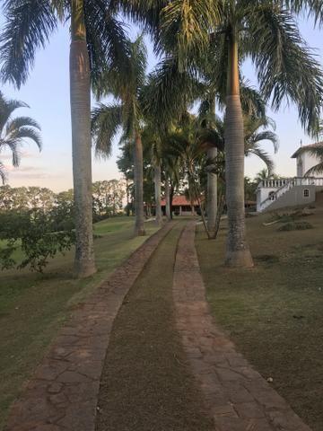 Palmeiras imperial adultas e sadias - Foto 2