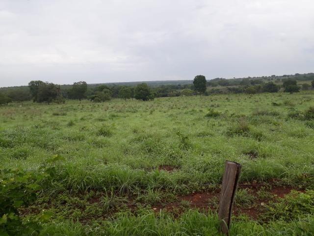 Fazenda com 160 aqls em Formoso do Araguaia - TO c/ confinamento e ótima infra!! - Foto 11
