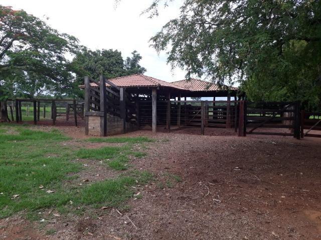 Fazenda com 160 aqls em Formoso do Araguaia - TO c/ confinamento e ótima infra!! - Foto 15