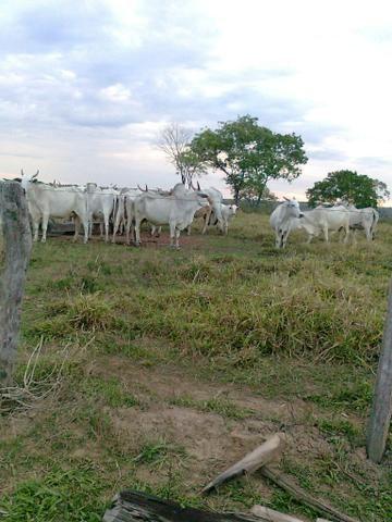 Fazenda em general carneiro-mt