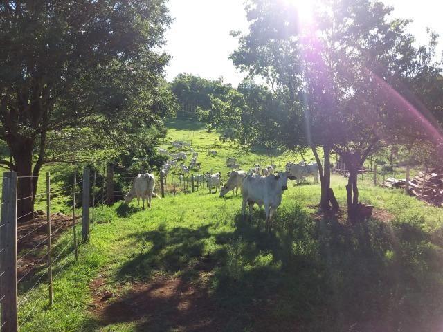 Área rural localizado na cidade de Lindoeste-PR - Foto 15