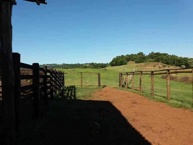 Área rural localizado na cidade de Lindoeste-PR - Foto 6