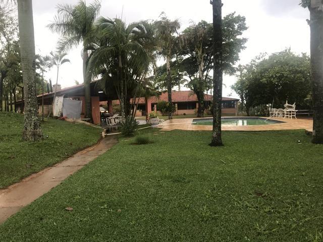 Palmeiras imperial adultas e sadias - Foto 6