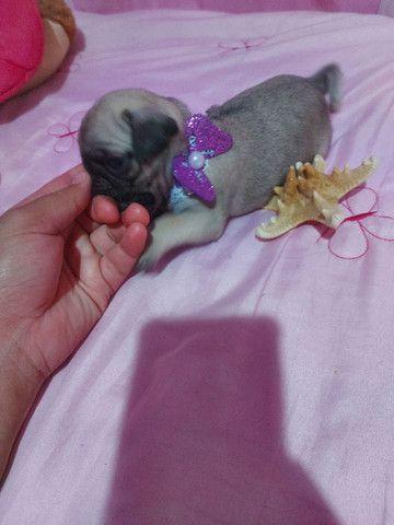Bebê pug menina - Foto 6