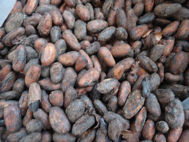 Amendoas de cacau torradas 1kg Ibiracau - Foto 6