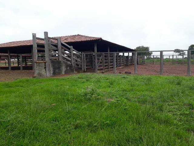 Fazenda com 160 aqls em Formoso do Araguaia - TO c/ confinamento e ótima infra!! - Foto 20