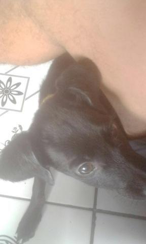 Cachorro encontrado na sacramenta