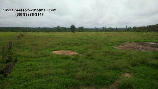 Fazenda 670 hectares nordeste mt nikolaiimoveis