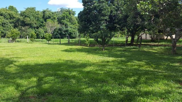 JP 013 -Ótima fazenda colado no Gama,excelente localização - Foto 5