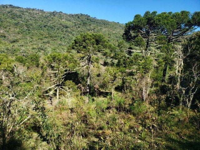 Sítio à venda em Bocaina do Sul - Foto 9